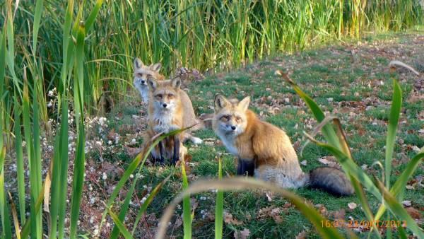 egy kép a farkukról fiatal meztelen tini videók